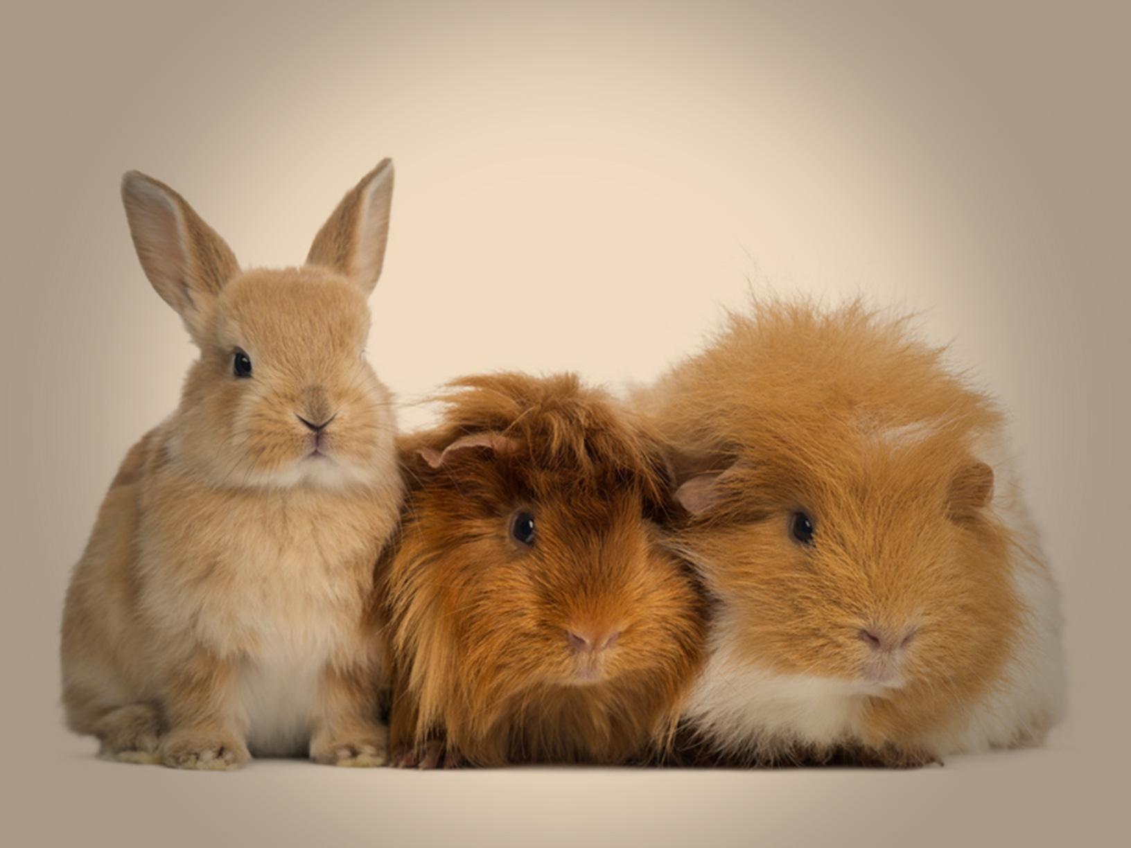 Gesundheit und Lebensfreude für jedes Tier